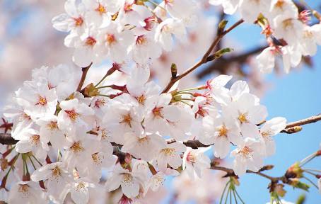 Détox de printemps : pour qui et pour quoi faire ?