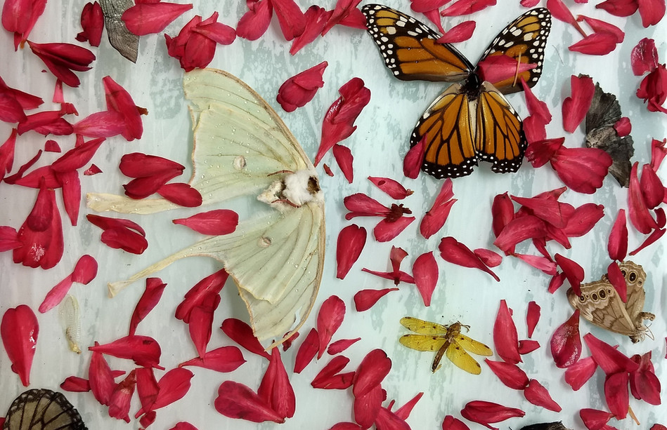 Found Insects and Camellia.jpg