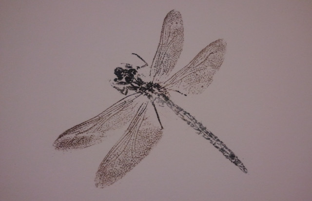 Foilography - Dragonfly