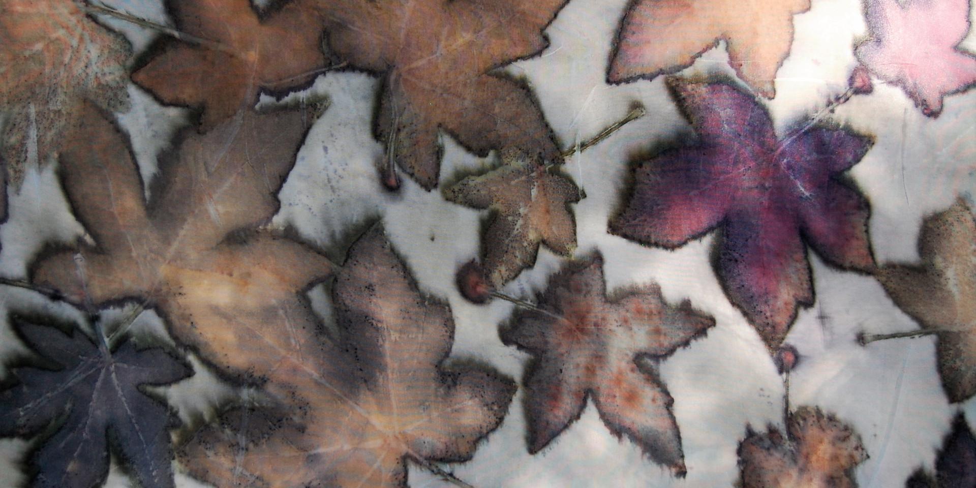 Detail - Sweetgum leaves