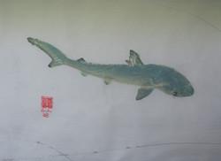 Blacktip Pup Shark