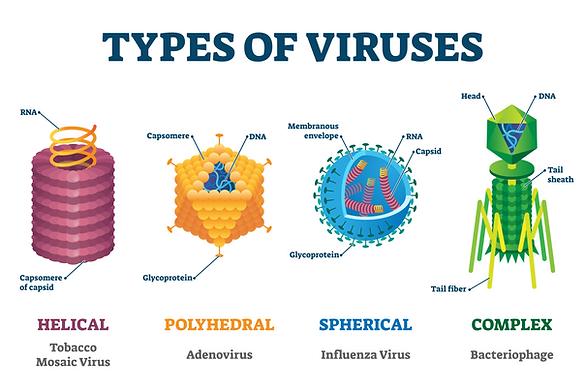 types of virusesshutterstock_1663543132.