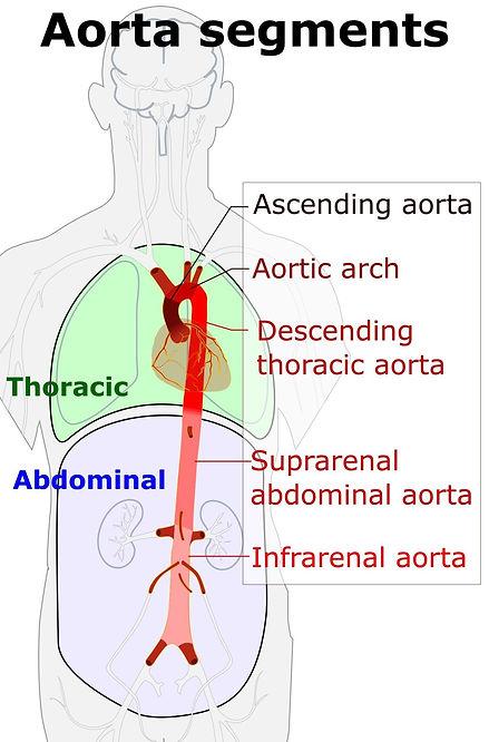 Aorta_segments.jpg