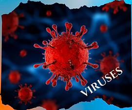 Viruses F.png