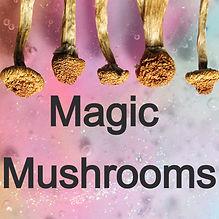 mushroom%20banner_edited.jpg