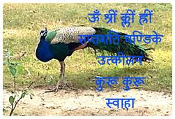 FB_IMG_1610290964848.jpg