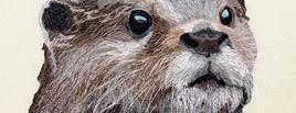 Otter Portrait