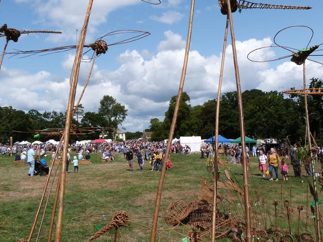 Willow bugs at Oak Fair