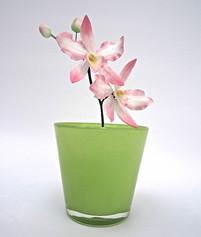 Cattleya Ochid