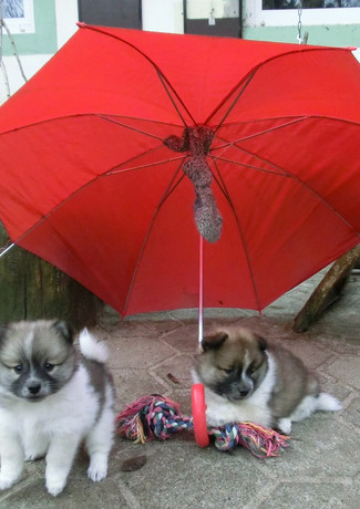 Mit Regenschirm im Gehege