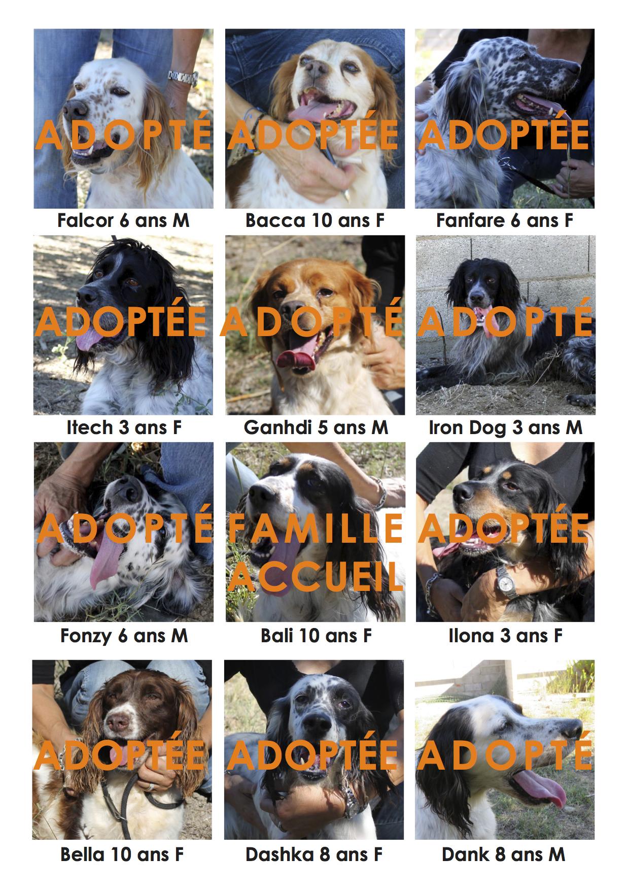 30 jours pour sauver 12 chiens
