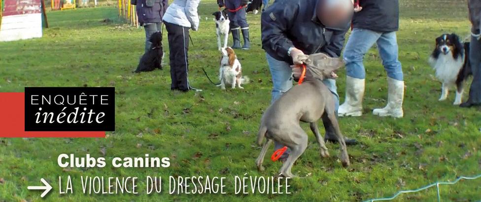 La maltraitance en club canin