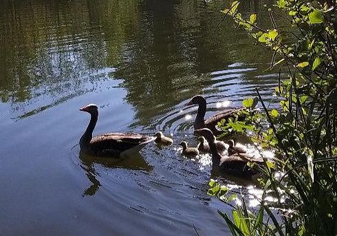 geese...._edited.jpg