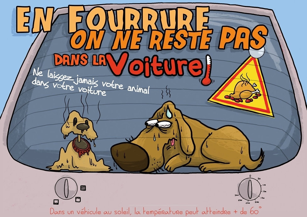 Affiche chien voiture.jpg