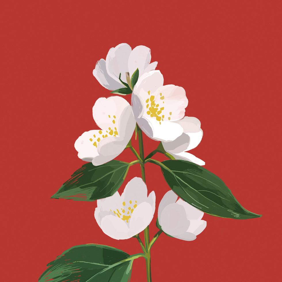 apr19_flower_v02.jpg