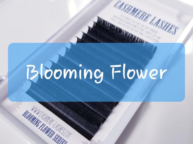 Blooming FLower Camellia Series