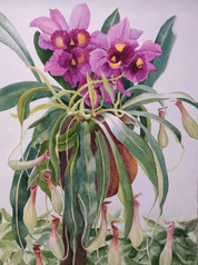 Third Place- Orchid Pitcher