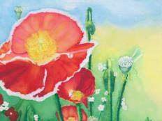 A Poppy's Splendor
