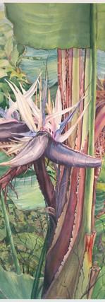 White Bird of Paradise