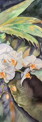 Orchidaceous