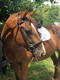 horse at Hathaway Hill