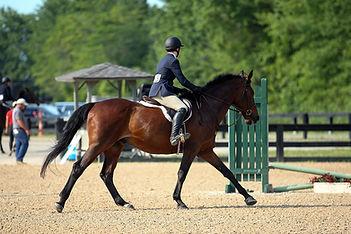 BRAVE HORSE 18.jpg