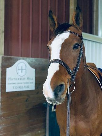 horse at the barn