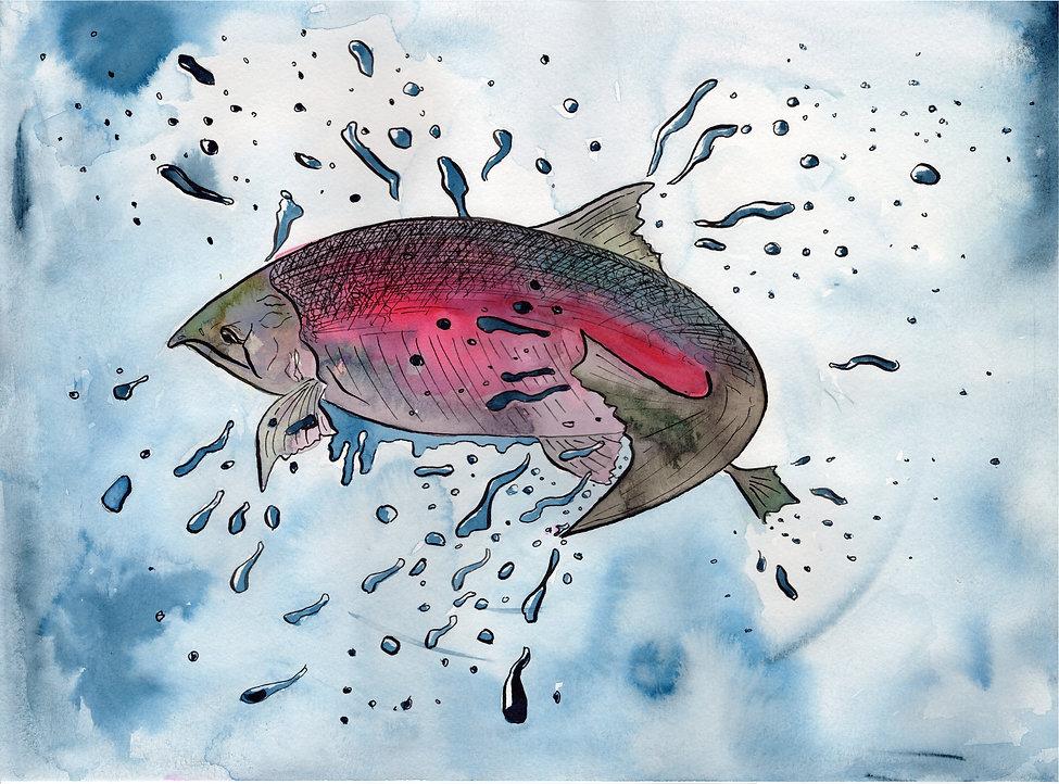 Salmon (2020)