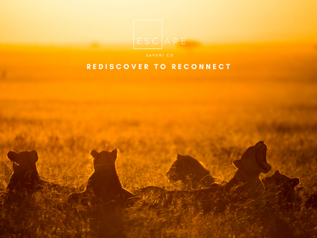 Rediscover to Reconnect