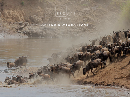 The 10 Greatest Migrations in Africa