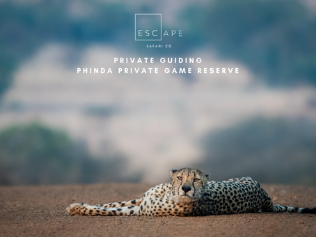 Privately Guided Safari to Phinda Private Game Reserve