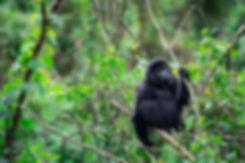 Escape Safari Co. Uganda (1 of 1)-2.jpg