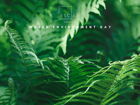 World Environment Day: Reimagine, Recreate, Restore