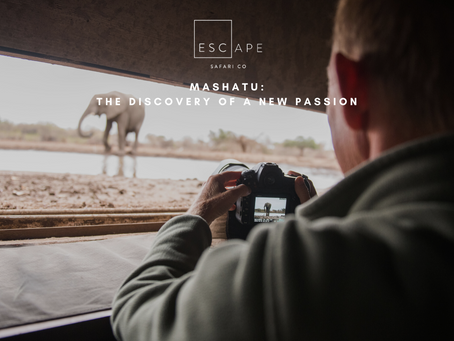 Mashatu: The Discovery of a New Passion