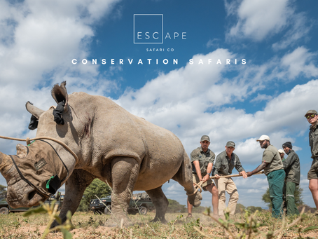 Conservation Safaris at Marataba Conservation Camps