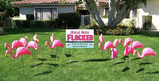 flocked yard.JPG