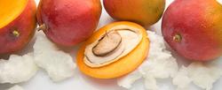 Mango-Butter-vs.-Shea-Butter.png