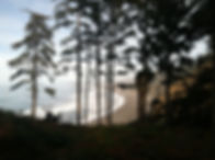 IMG_1943_edited.jpg