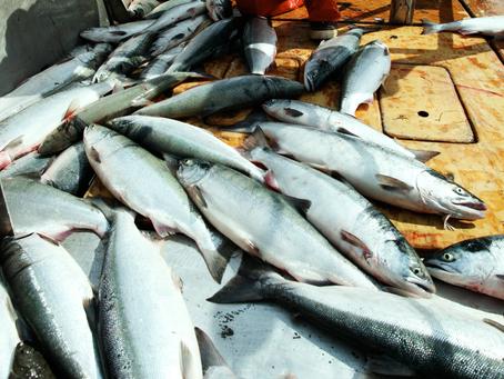 Vendor Spotlight: Thomas Persinger, Wild Alaska Salmon and Seafood