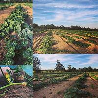 penton farms.jpg