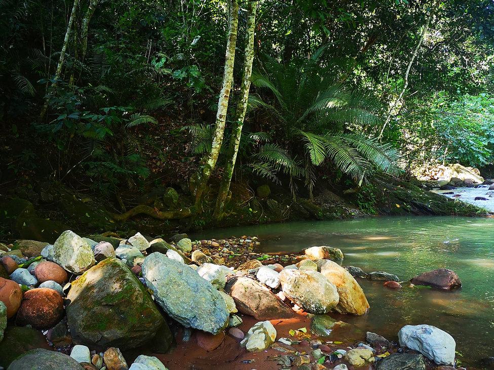 La Selva Madre - NOva Terra - San Pedro de cumbaza - Lucille aimée