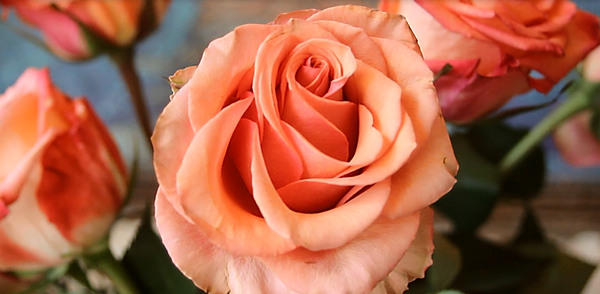 rose-orange.png