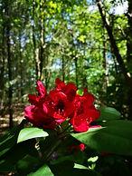Lucille aimée - forêt médecine.jpg