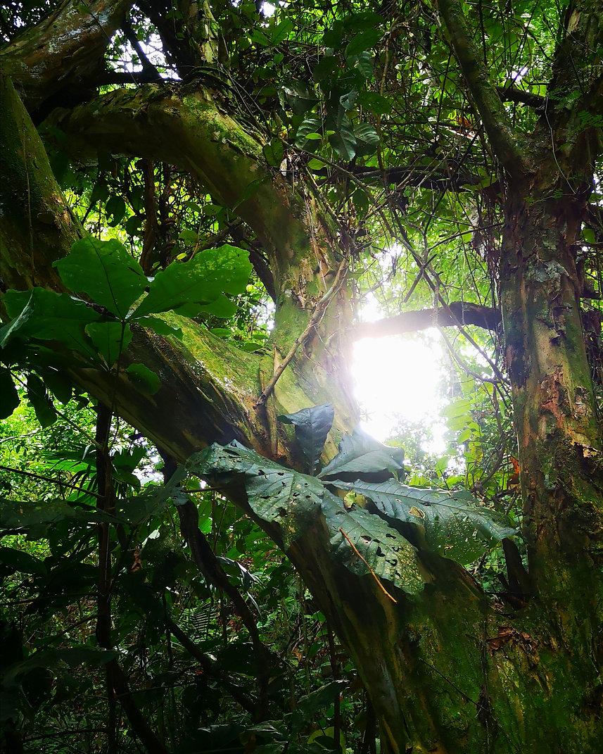 Luxuriance selva- Lucille aimée, Pérou.j