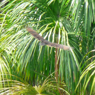 L'oiseau dans la luxuriance végétale. Lucille aimée