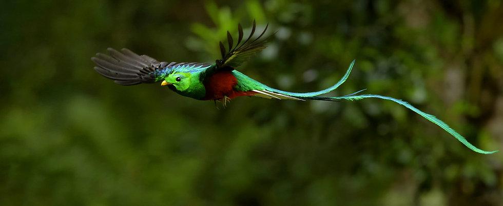 oiseau-dragon-Lucille aimée.jpeg