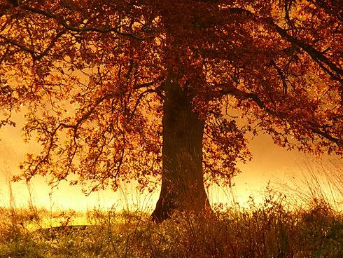 automne_dorée1.jpg