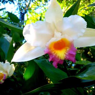 Les fleurs parfumées du jardin de la selva.