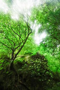 英彦山 高住神社