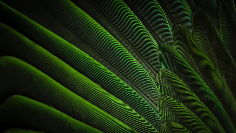 Feather%2520simplicity_edited_edited.jpg